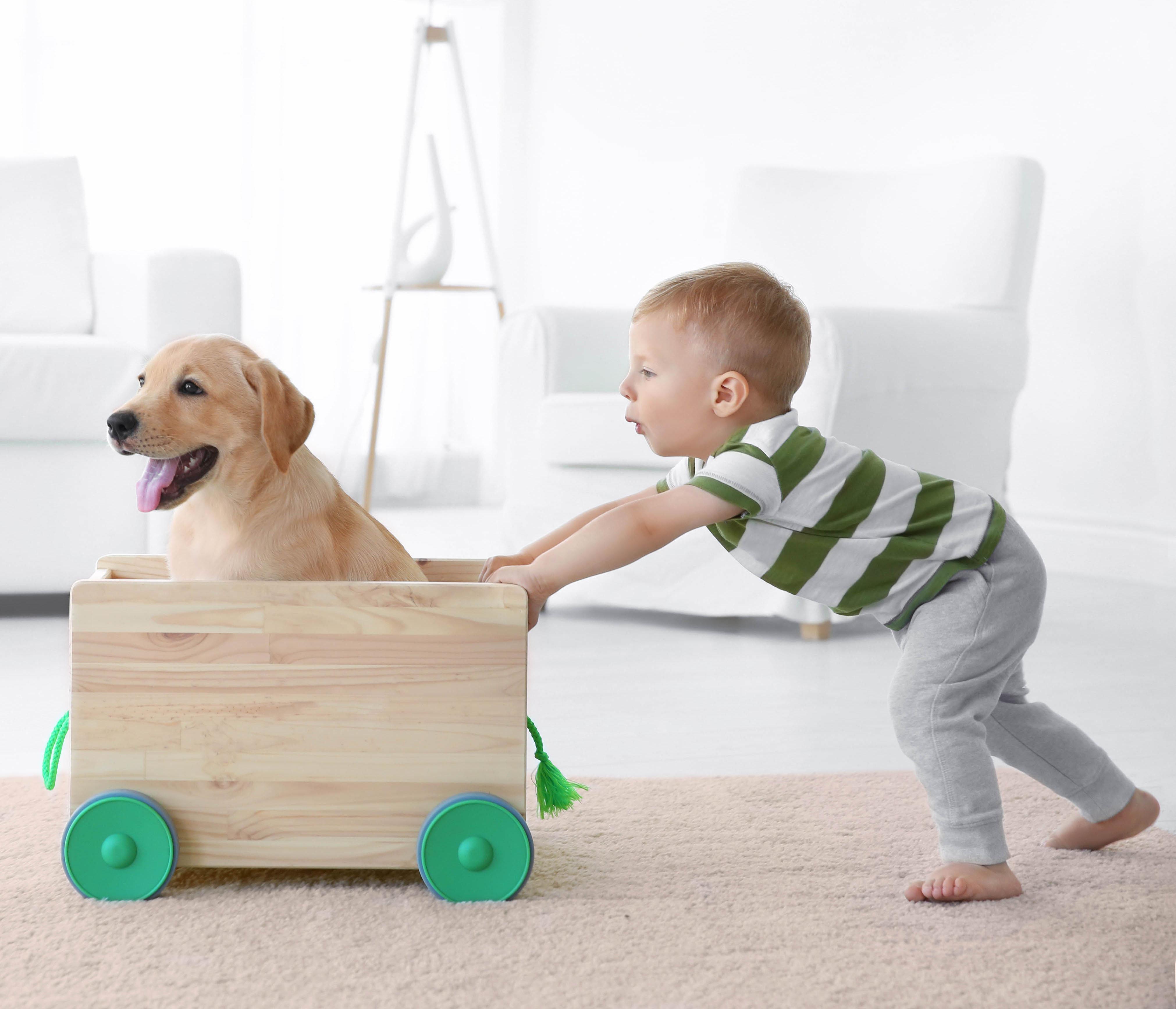 Boy Pushing Dog