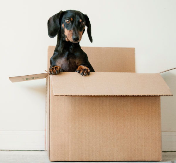 Dog in Shipping Box