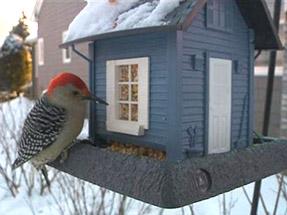 Birdhouse Winter Kare11