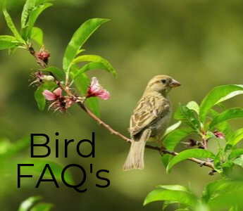Bird FAQs mobile