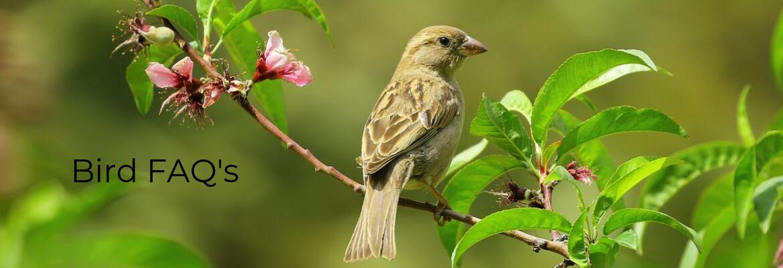 Bird FAQs