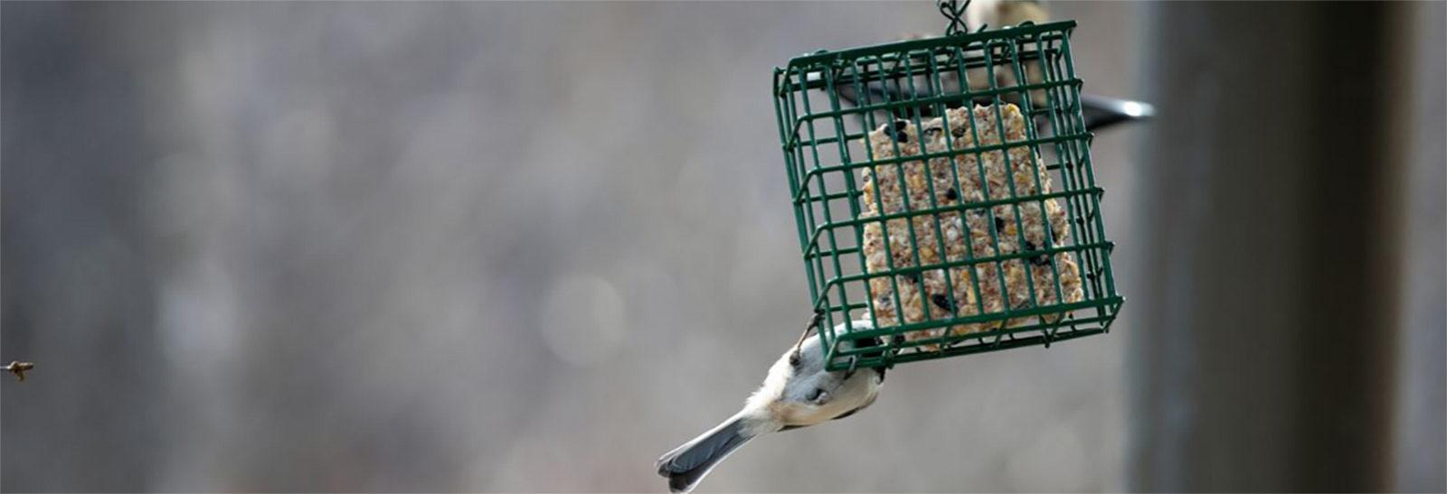 Bird Feeder Banner