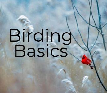 Birding Basics Mobile