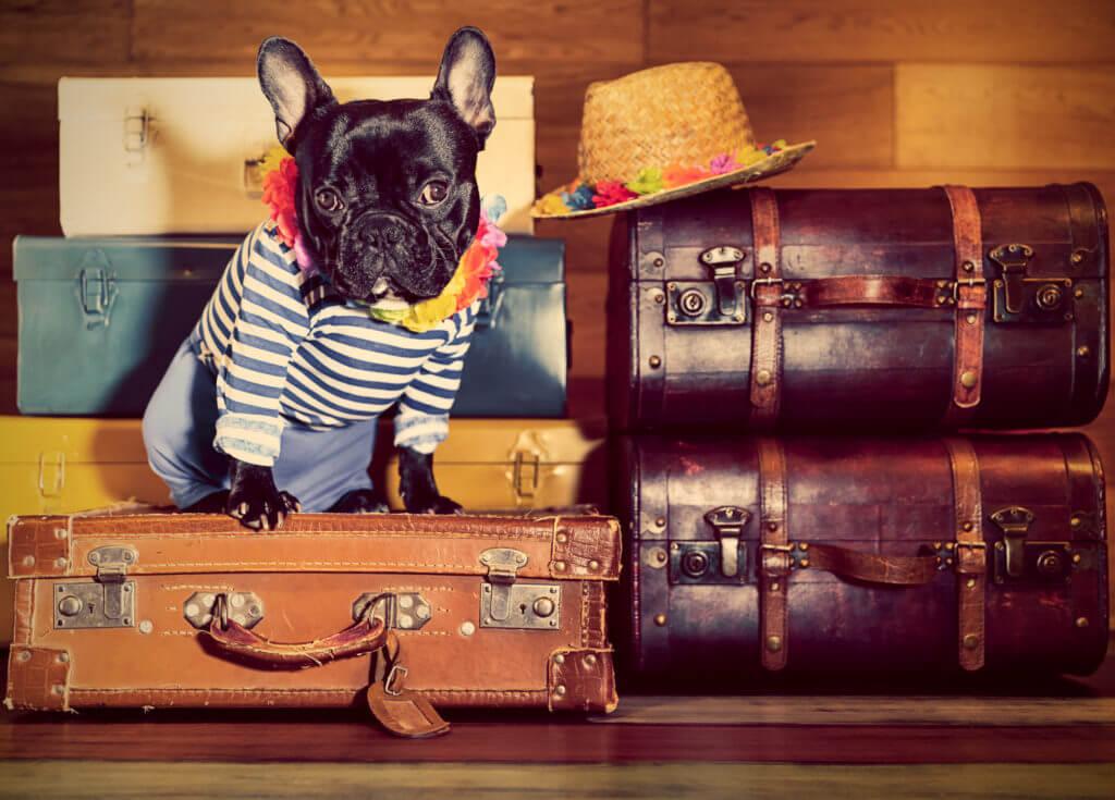 Dog sitting on suitcases